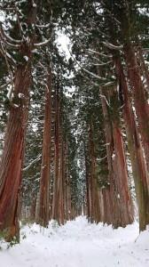 bois et neige